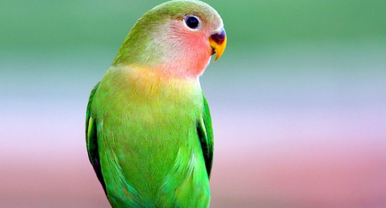 Beautiful Parrot