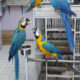 Parrot for Sale in Dubai | Pet Shop in Dubai