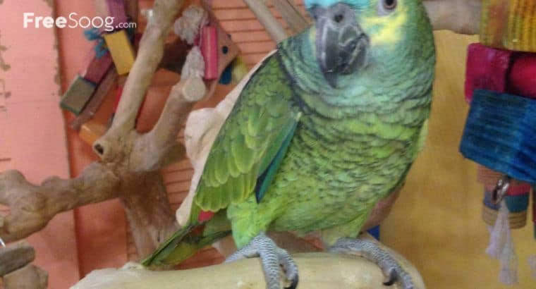 buy exotic animals for pet lovers|parrots and fertile eggs for sale
