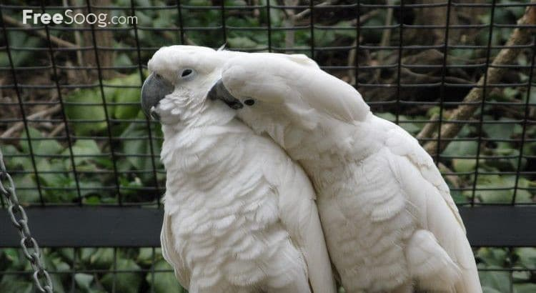 tame parrots, cockatoos, amazons with different species and fertile eggs for sale