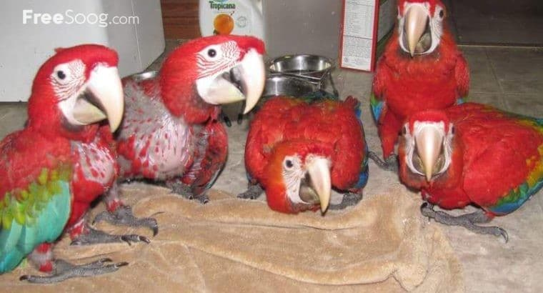 Deals in Parrot Eggs, parrot cups, Bird Farming